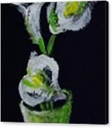 Calla Lily Study Canvas Print