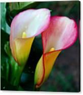Calla Lily Twins Canvas Print