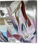 Calla Canvas Print