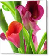 Callas In Pink Canvas Print