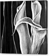 Callas Lilies Trio Canvas Print