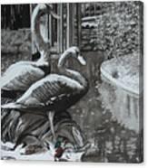 Callaway Mallard Ducks Canvas Print