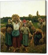 Calling In The Gleaners Canvas Print