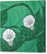 Calystgia Sepium  Canvas Print
