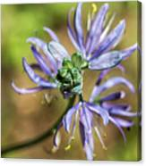 Camas Bud To Bloom Canvas Print