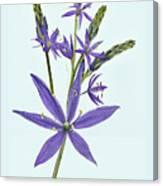 Camas, The Flowers Canvas Print