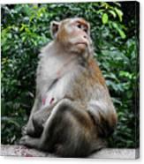 Cambodia Monkeys 2 Canvas Print