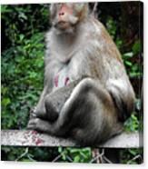 Cambodia Monkeys 3 Canvas Print