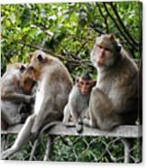 Cambodia Monkeys 5 Canvas Print