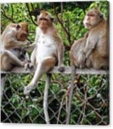 Cambodia Monkeys 7 Canvas Print