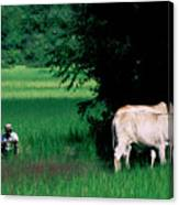 Cambodian Farmer Canvas Print