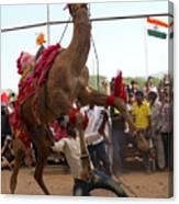 Camel Dance Pushkar Canvas Print