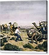 Camel Express, 1857 Canvas Print