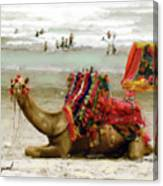 Camel For Ride  Canvas Print