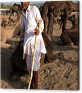 Camel Trader Pushkar Canvas Print