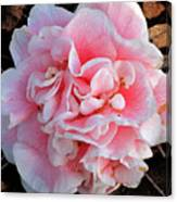 Camellia Flower Canvas Print