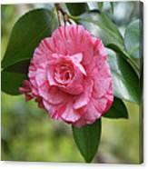 Camellia Hybrid Canvas Print