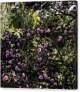 Camellia Tree Canvas Print