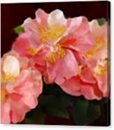 Camellias 1cmods1b Digital Painting Gulf Coast Florida Canvas Print