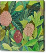 Camellias Canvas Print