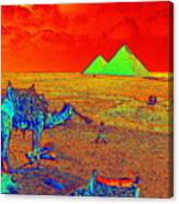 Camels At Giza Canvas Print