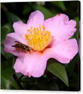 Camilia Bee Canvas Print