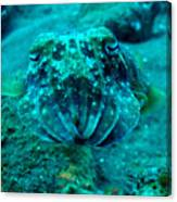 Camo Cuttlefish Canvas Print