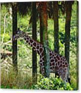 Camouflage Coat Canvas Print