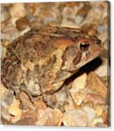 Camouflage Toad Canvas Print