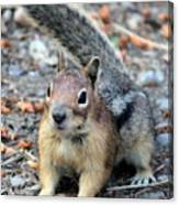 Campground Chipmunk Canvas Print
