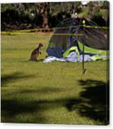 Camping With Swamp Wallaby Canvas Print