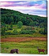 Canaan Valley Evening Canvas Print