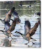 Canada Geese 1390-011618-1 Canvas Print