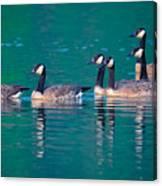 Canada Geese 2 Canvas Print
