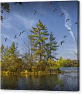 Canada Geese Flying By A Small Island On Hall Lake Canvas Print