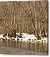 Canada Geese On Concord River Canvas Print