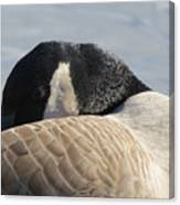 Canada Goose Head Canvas Print