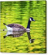 Canada Goose Swimming In A Pond Canvas Print