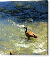 Wildlife Scenes #3 Canvas Print