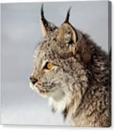Canada Lynx Up Close Canvas Print