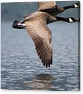 Canada's Goose Canvas Print