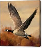 Canada Air Canvas Print