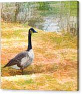 Canadian Geese 6 Canvas Print
