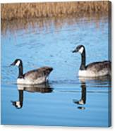 Canadian Geese Couple Canvas Print