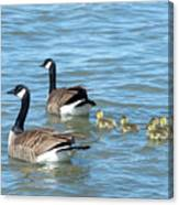 Canadian Geese Family Vacation Canvas Print