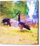 Canadian Geese In The Park 3 Canvas Print