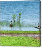 Canadian Geese - Wichita Mountains - Oklahoma Canvas Print