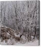 Canadian Ice Fog  Canvas Print
