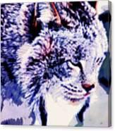 Canadian Lynx 1 Canvas Print