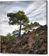 Canary Pines Nr1 Canvas Print